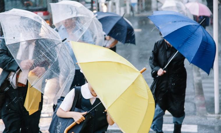 taifu-0i9a5577_tp_v
